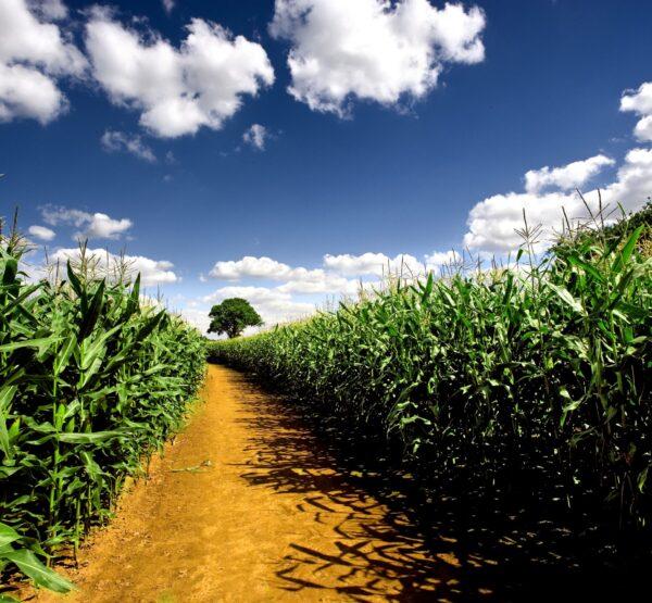 Fertilizer Trial Fields